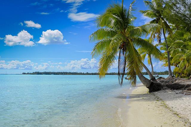 Bora Bora - La playa y palmeras