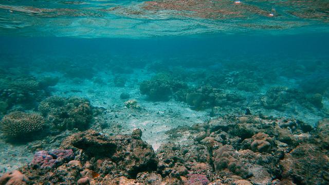 Il mare di Rarotonga