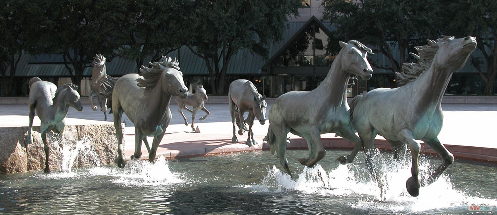 Mustangs a Las Colinas