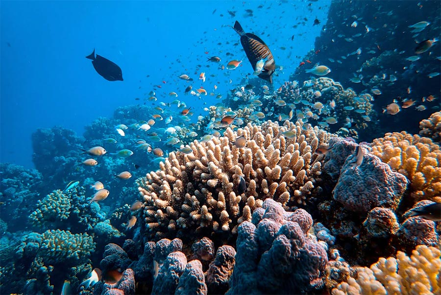 vacanza subacquea in Egitto